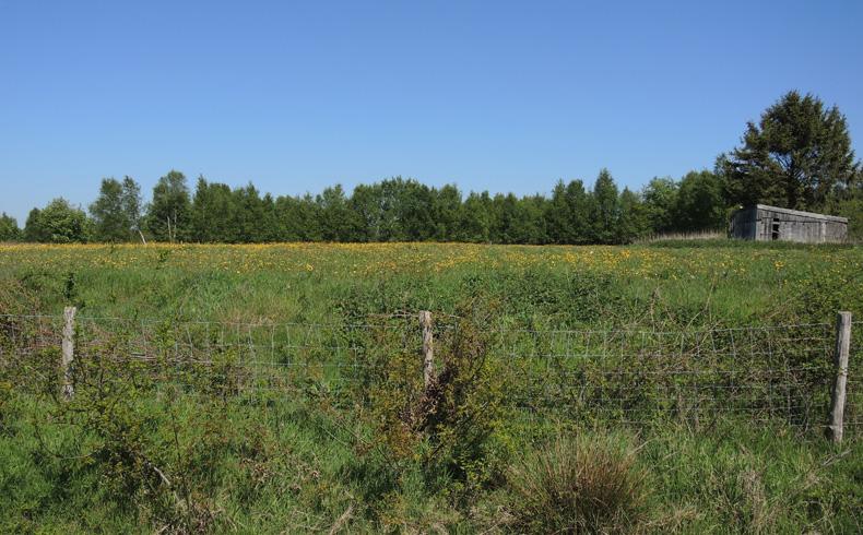 voetzoekers-bargerveen-geel-veld