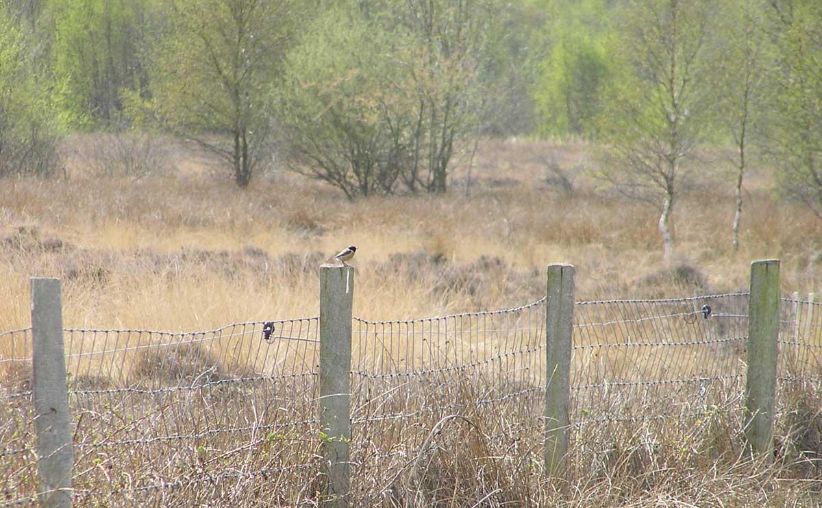 voetzoekers-bargerveen-geel-vogels