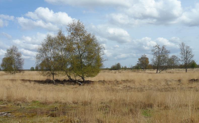 voetzoekers-bargerveen-geel-weids-landschap