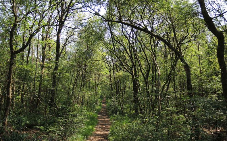 het-kremboongbos-bospad-2-voetzoekers