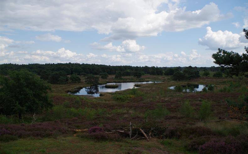 rivierduinenroute-een-van-de-vergezichten-voetzoekers