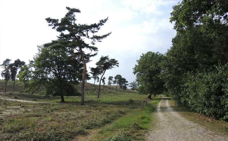 rivierduinenroute-pad-door-de-maasduinen-voetzoekers