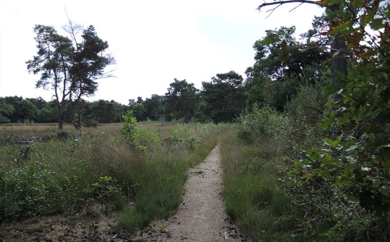 rivierduinenroute-pad-naar-vogelkijkwand-voetzoekers