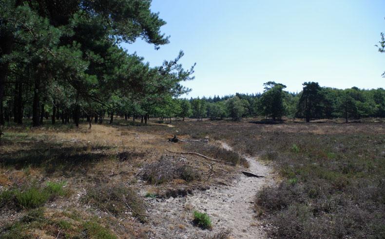 orvelterzand-boomheide-voetzoekers