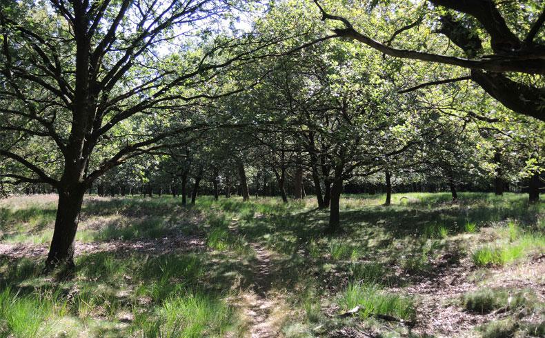 orvelterzand-wandelpad-voetzoekers