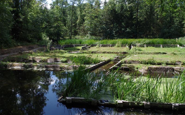 havenroute-waterloopbos-koelwatervijver-voetzoekers