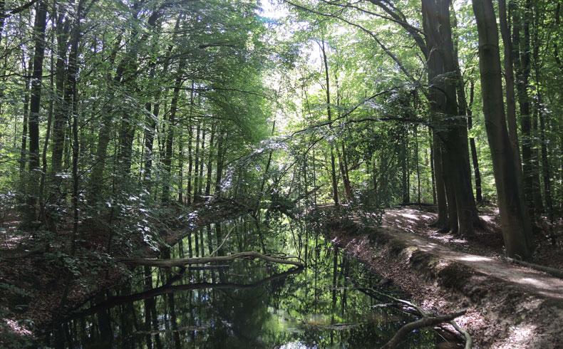havenroute-waterloopbos-pad-langs-het-water-voetzoekers