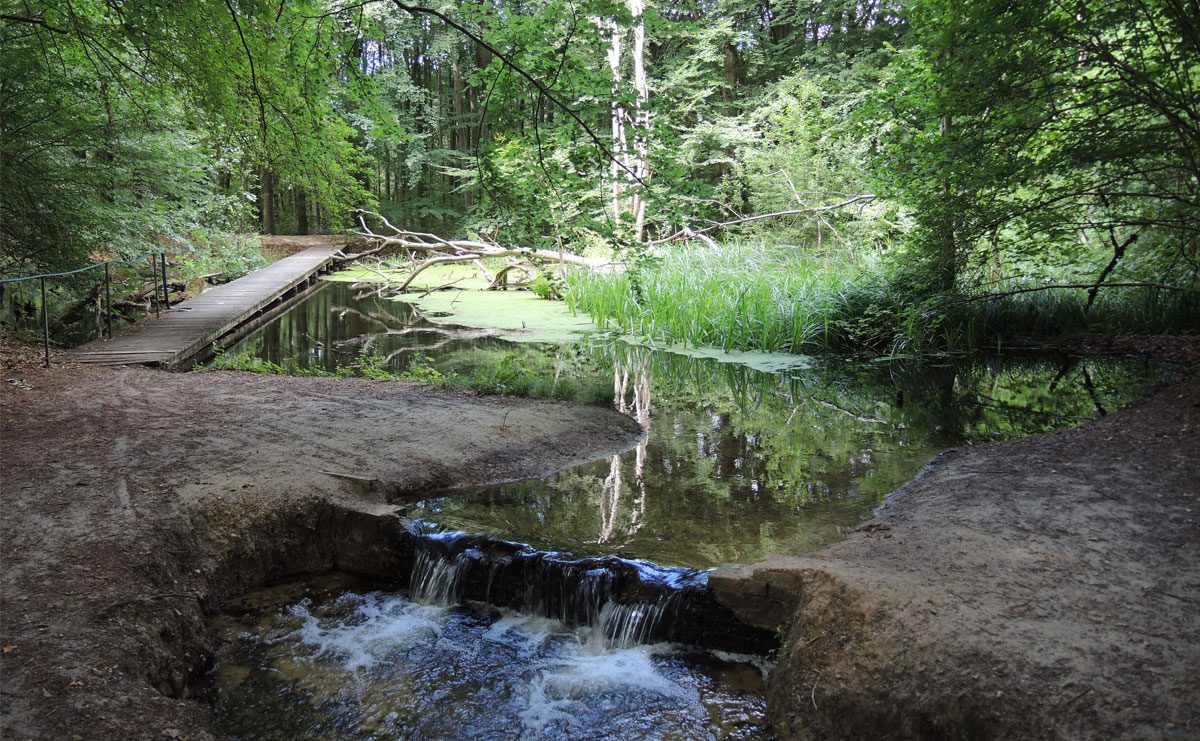 Havenroute in het Waterloopbos