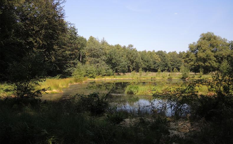 natuurbelevingspad-westerwolde-ven-tijdens-de-wandeling-voetzoekers