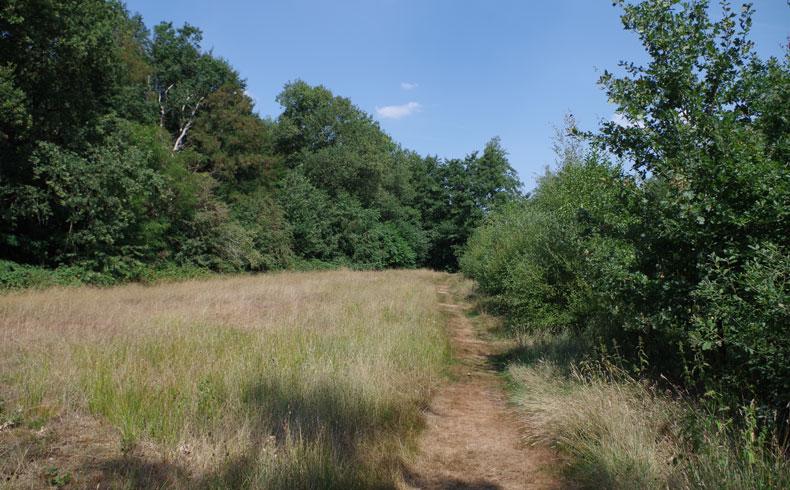 natuurbelevingspad-westerwolde-hooiland-voetzoekers