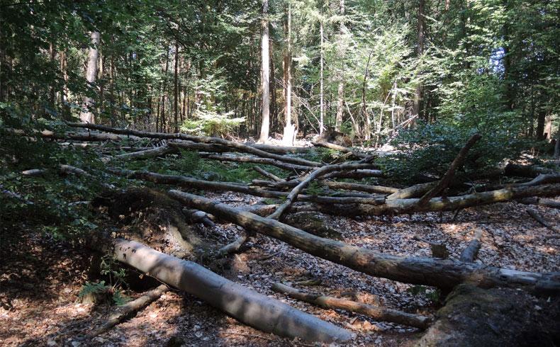 natuurbelevingspad-westerwolde-speelbos-bij-de-noordmee-voetzoekers