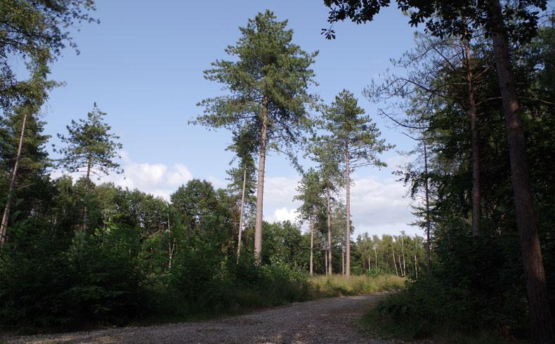 filosofenroute-bomen-voetzoekers