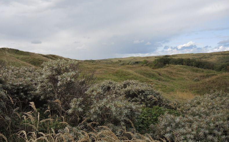 voetzoekers-de-muy-texel-duinen