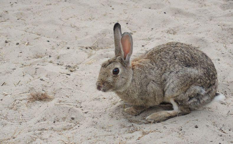 voetzoekers-de-muy-texel-konijn