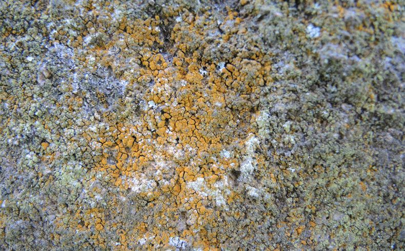 voetzoekers-hunebed-d16-balloo-mos