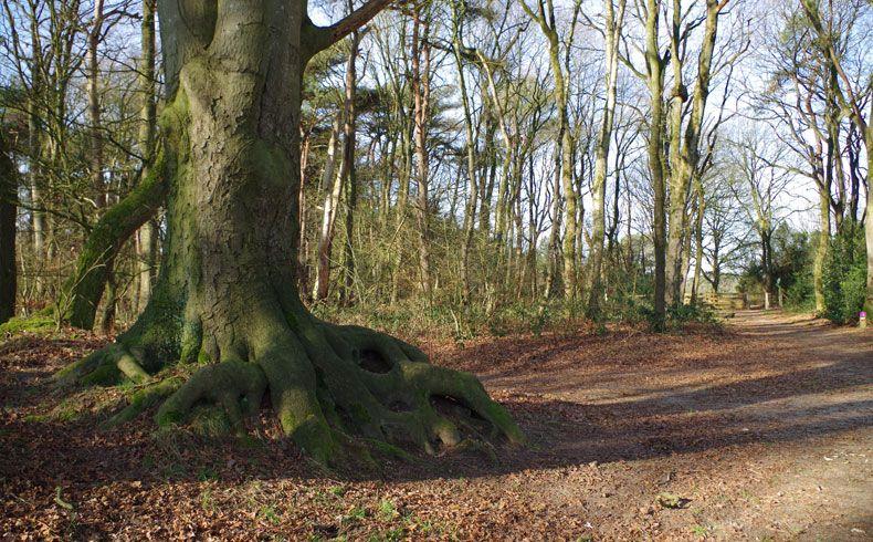 voetzoekers-kampsheide-boomwortels