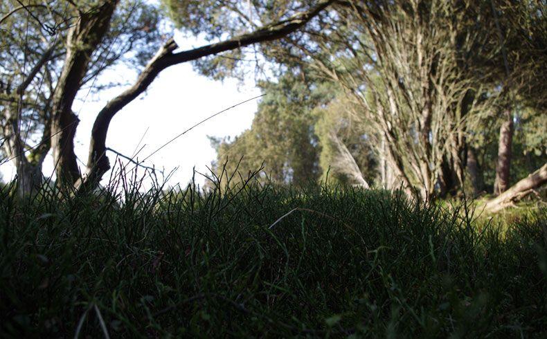 voetzoekers-kampsheide-bosbes