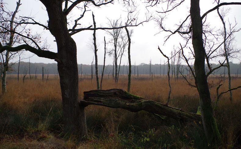 voetzoekers-appelbergen-het-grote-veen-2