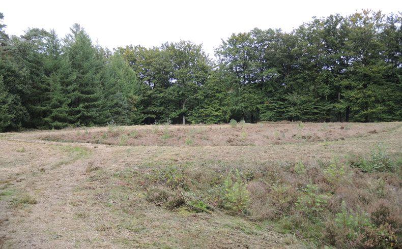 voetzoekers-archeologische-route-sleenerzand-celtic-field-2