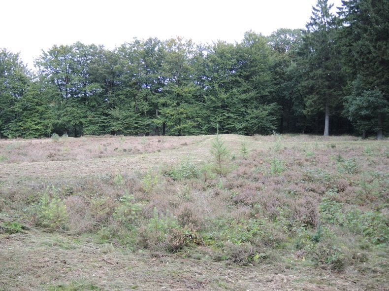 voetzoekers-archeologische-route-sleenerzand-celtic-field