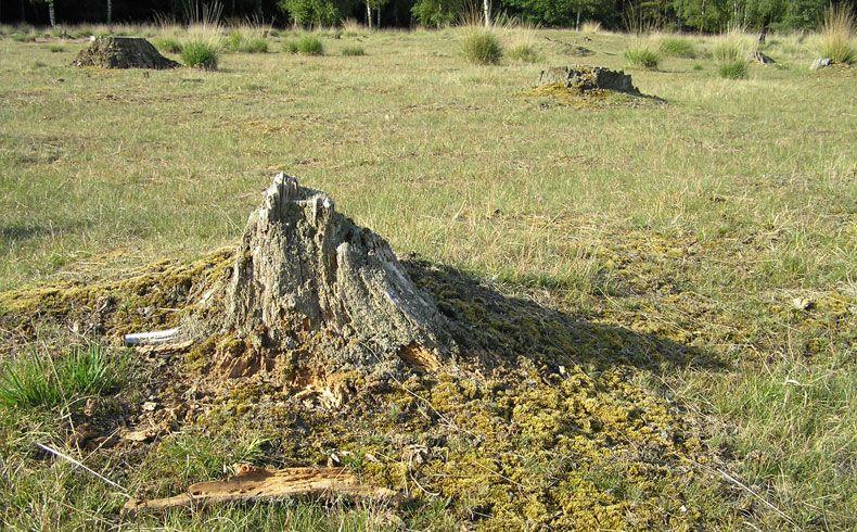 voetzoekers-archeologische-route-sleenerzand-celtic-fields