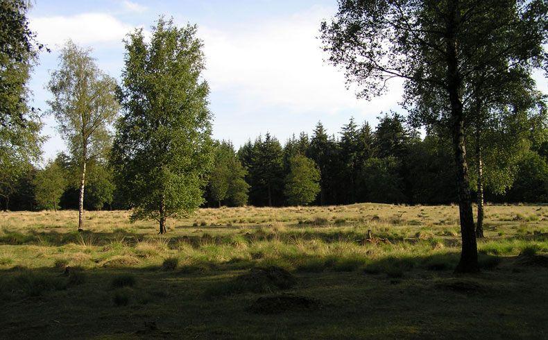 voetzoekers-archeologische-route-sleenerzand-grafheuvelveld