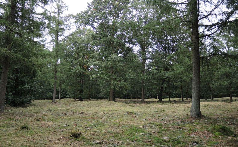 voetzoekers-archeologische-route-sleenerzand-nog-een-grafheuvelveld