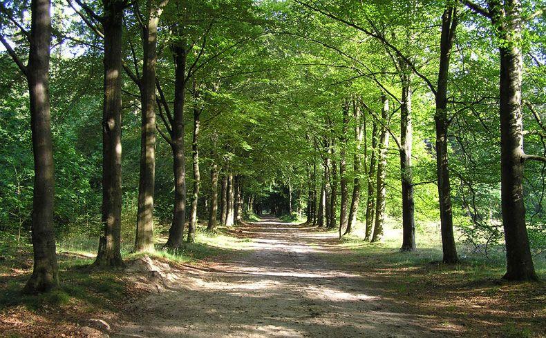 voetzoekers-archeologische-route-sleenerzand-start-route