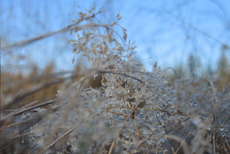 voetzoekers-boswandeling-spier-bevroren-vegetatie