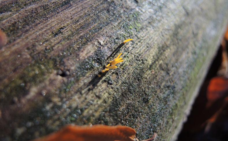 voetzoekers-boswandeling-spier-geel-hoorntje