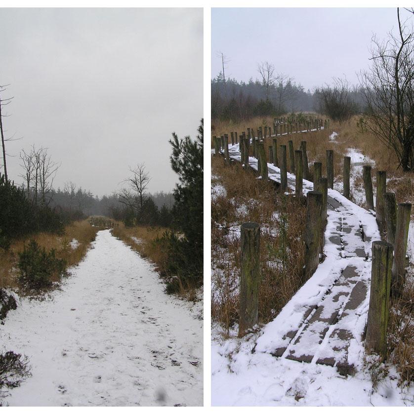 voetzoekers-boswandeling-spier-in-de-sneeuw