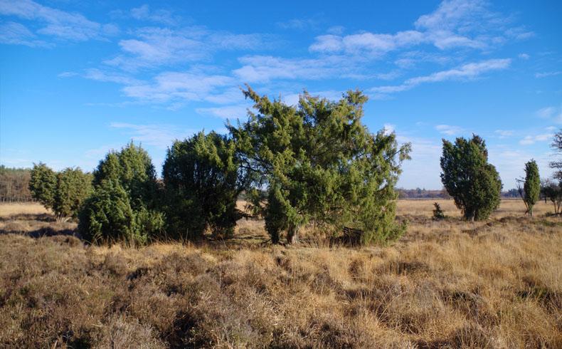 voetzoekers-boswandeling-spier-jeneverbes