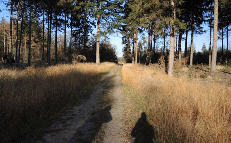 voetzoekers-boswandeling-spier-op-pad
