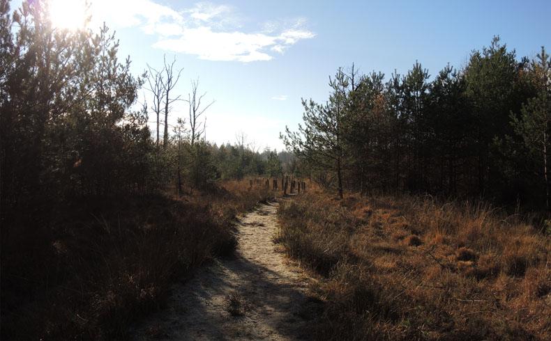 voetzoekers-boswandeling-spier-plankenpad-1
