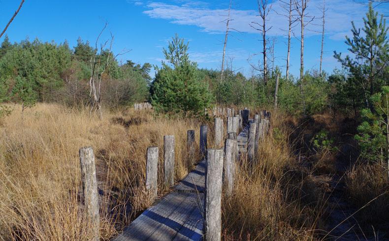 voetzoekers-boswandeling-spier-plankenpad-4