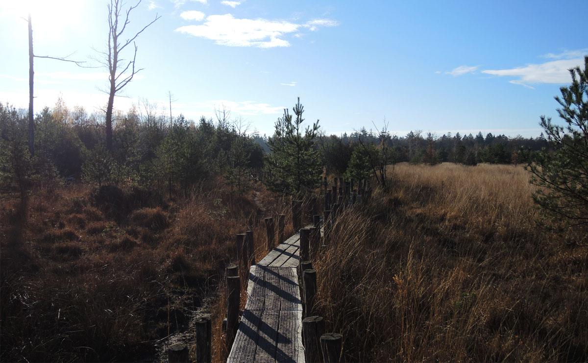 5.5 km – Boswandeling Spier