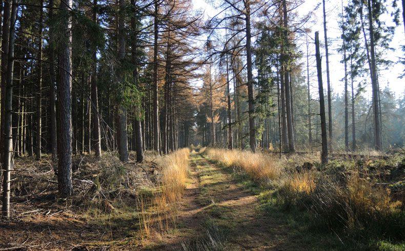 voetzoekers-esmeerroute-bos-bij-het-esmeer