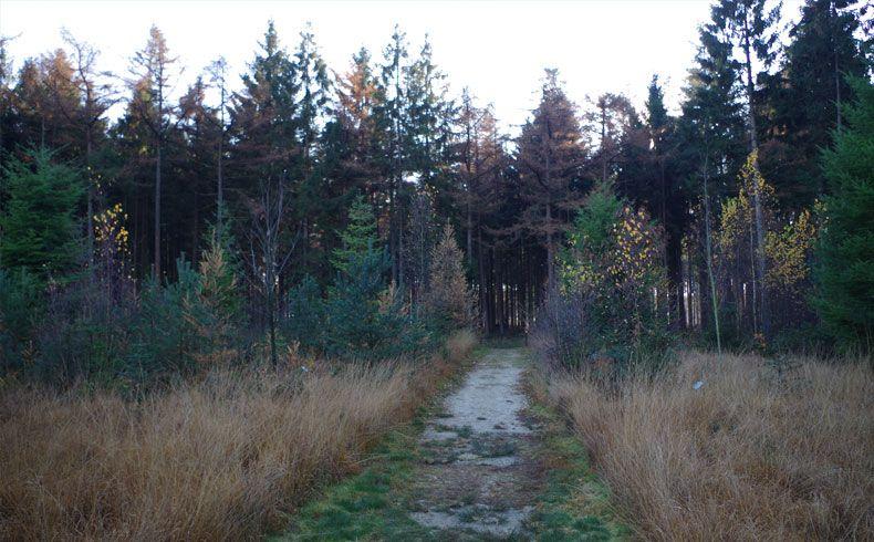 voetzoekers-esmeerroute-bos-van-de-toekomst-2