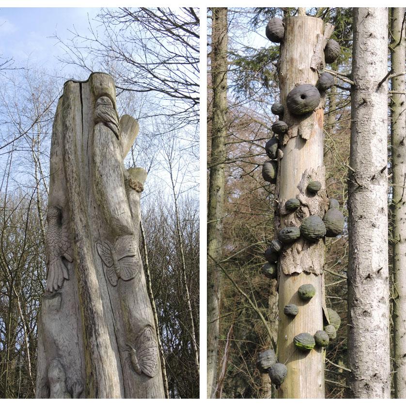 voetzoekers-familiepad-drents-friese-wold-dode-bomen
