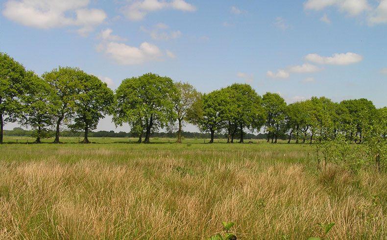 voetzoekers-geeserstroom-bomen-langs-het-pad-2