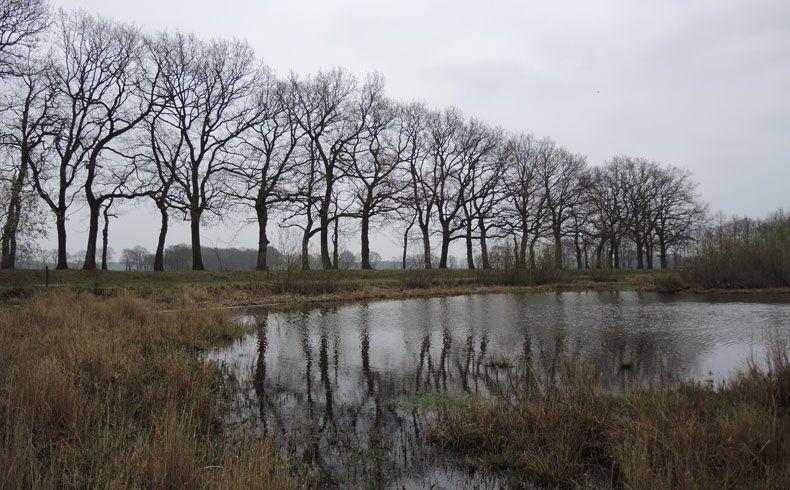 voetzoekers-geeserstroom-bomen-langs-het-pad