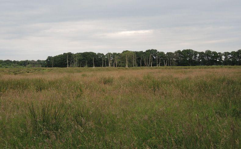 voetzoekers-geeserstroom-dode-bomen