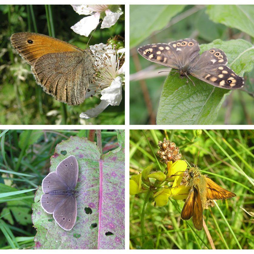 voetzoekers-geeserstroom-impressie-vlinders