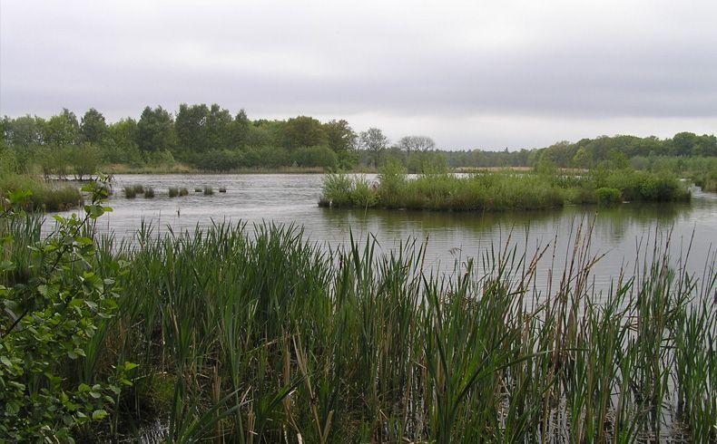 voetzoekers-geeserstroom-open-water