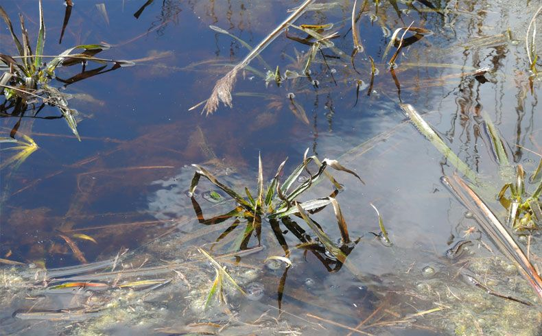 voetzoekers-vlonderpad-de-wieden-krabbescheer