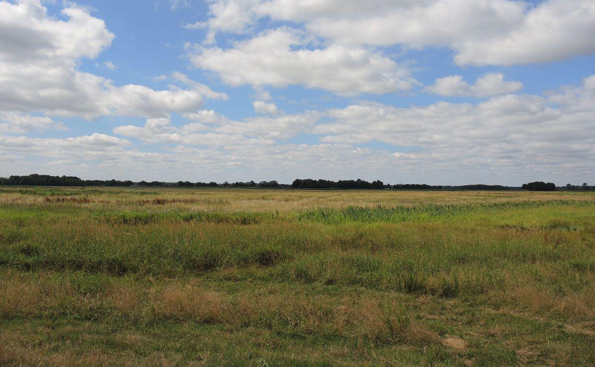 voetzoekers-annermoeras-grasland