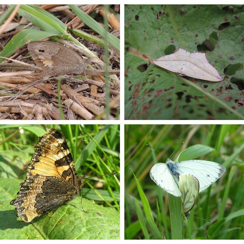 voetzoekers-annermoeras-impressie-vlinders