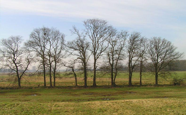 voetzoekers-oude-kene-bomenrij