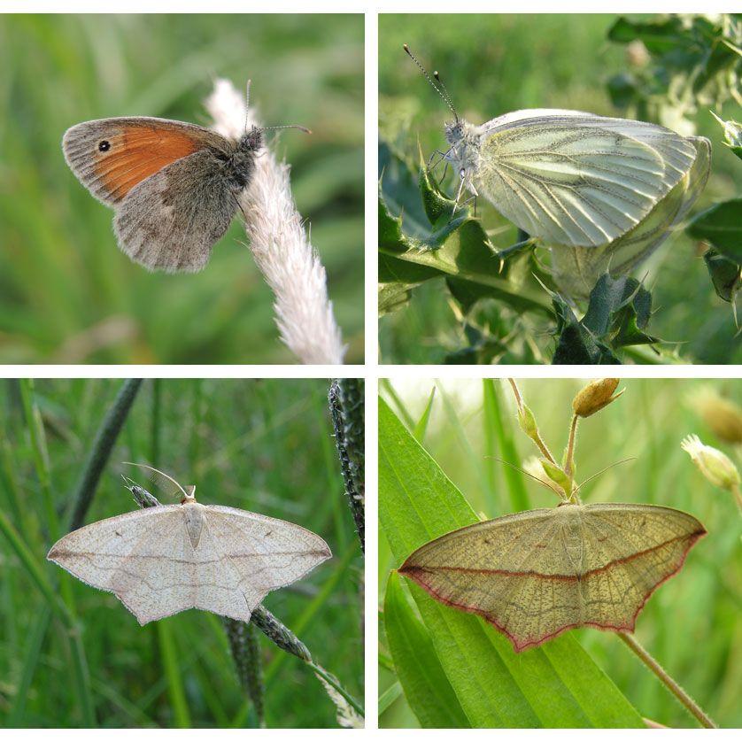 voetzoekers-oude-kene-vlinders