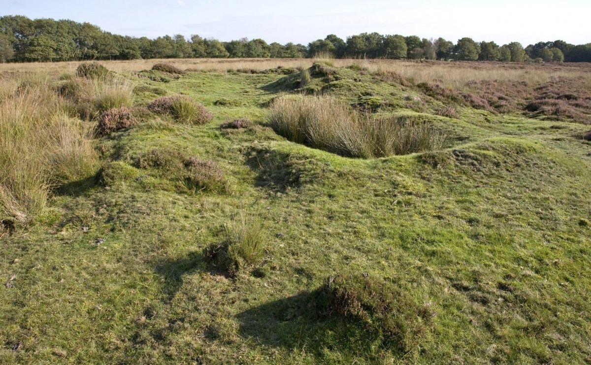 voetzoekers-de-gasterse-duinen-vergraven-grafheuvel